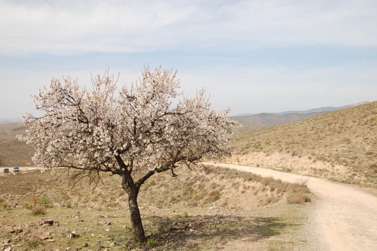 primavera2.jpg